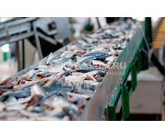 """Линия для производства рыбных консервов """"под ключ"""""""